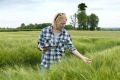 Signora con il computer della compressa che ispeziona la pianta del grano nel campo enorme Fotografia Stock Libera da Diritti
