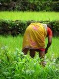 Signora del coltivatore Fotografia Stock Libera da Diritti