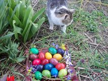 Signora del gatto è disinteressata fotografie stock