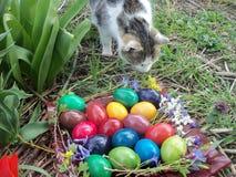 Signora del gatto che odora i fiori fotografia stock