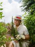 Signora del giardino di erba fotografia stock