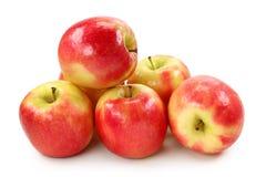Signora dentellare del Apple immagine stock libera da diritti