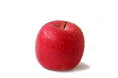 Signora dentellare del Apple Fotografie Stock Libere da Diritti