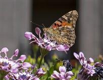 Signora dipinta Butterfly Profile con le ali aperte immagini stock