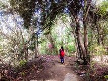 Signora in foresta Fotografia Stock