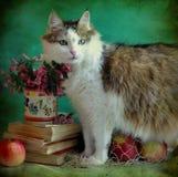 signora-gatto ed ancora vita Fotografia Stock