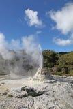 Signora Knox Geyser - il Distretto di Rotorua Nuova Zelanda Fotografie Stock
