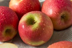Signora rosa organica rossa cruda Apples Immagine Stock Libera da Diritti