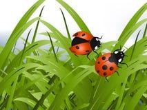 Signora rossa intelligente Bug Fotografia Stock Libera da Diritti
