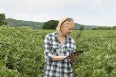 Signora Smiles While Glancing sullo schermo della compressa nel campo dell'azienda agricola fotografie stock libere da diritti