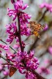 Signora verniciata Butterflies Immagine Stock