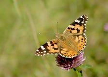 Signora verniciata Butterfly Immagini Stock