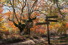 Signpost. A Signpost in autumn forest royalty free stock images