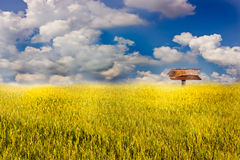 Signpost in the field.  Royalty Free Stock Photography