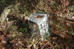 Signpost nella foresta Fotografia Stock