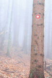 Signpost on a Tree Stock Photography