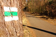 Signposting. Asphalt road in the woods royalty free stock photos