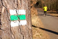 Signposting. Asphalt road in the woods, tourist signs on the tree, runner in the background stock image