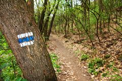 Signposting. Blue tourist sign on a tree in the forest royalty free stock image