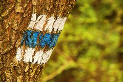 Signposting. Blue tourist sign on a tree in the forest stock images