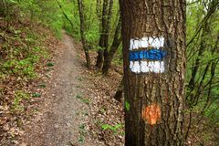 Signposting. Blue tourist sign on a tree in the forest stock image