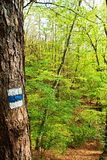 Signposting. Blue tourist sign on a tree in the forest royalty free stock photo