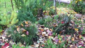 Signs of autumn in the flower bed stock footage
