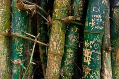 Signs on bamboo Stock Photography