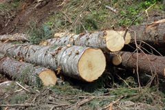 Signs of deforestation in british columbia Stock Photos