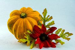 Signs of fall. An acorn squash  and flower on a white back ground Royalty Free Stock Photography