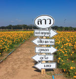Signs of the field marigold Stock Photos