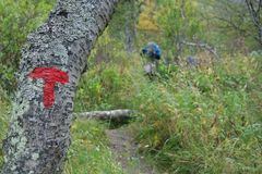Signs of the Norwegian Trekking Association on a three. Signs of the Norwegian Trekking Association on a three in Trollheimen. This is a guide to trekkers who Royalty Free Stock Photos