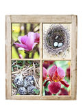 Signs of Spring Stock Photos