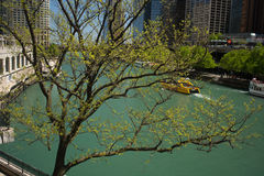 Signs of spring in Chicago Royalty Free Stock Images