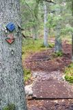 Hiking track signs on a tree in forest Stock Photography