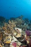 Sigue habiendo el crecimiento coralino subacuático en el cargo. Fotografía de archivo