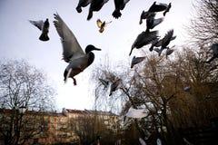sihlouette πτήσης πουλιών Στοκ Φωτογραφία
