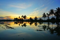 Sihlouette of coconut tree during sunrise. At paddy field Stock Photos