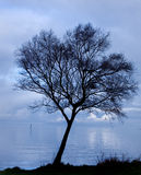 Sihlouette of a tree by a lake at dusk. Shot against a deep blue cloudy sky Royalty Free Stock Photos