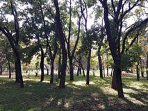 Sihlouettes de los árboles en el parque Foto de archivo