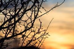 Sihouette дерева захода солнца и черноты безлистное Стоковые Изображения RF