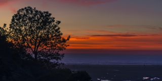 Sihouette av träd på solnedgången i den San Elijo lagun royaltyfri fotografi