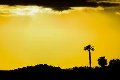 Sihouette de la palmera Imagenes de archivo