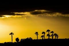 Sihouette de la palmera Imagen de archivo