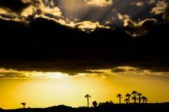 Sihouette de la palmera Foto de archivo