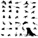 sihouette del reptil Fotos de archivo