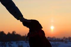 Sihouette einer Hunde- und Mannhand Stockfotografie
