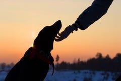 Sihouette einer Hunde- und Mannhand Stockbild