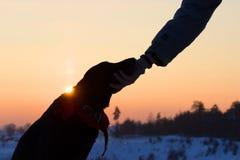 Sihouette einer Hunde- und Mannhand Lizenzfreies Stockfoto