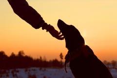 Sihouette einer Hunde- und Mannhand Lizenzfreies Stockbild